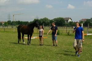 Pferdegestütztes Training